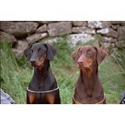 Обучение хозяина управлению собакой в реальных условиях фото