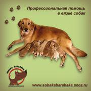 Помощь профессионального кинолога в вязке собак фото