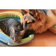 Родовспоможение у собак и кошек фото