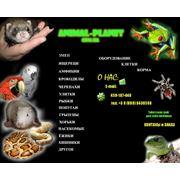 Продажа экзотических животных фото
