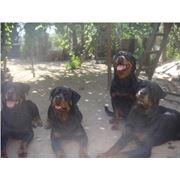 Разведение собак фото
