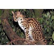 Животные на заказ доставка экзотических диких животных по всей Украине Одесса фото