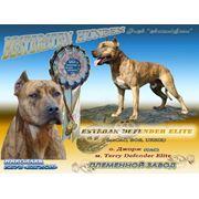 Визитные карточки для производителей и собак-чемпионов фото