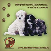 Помощь при выборе щенков фото