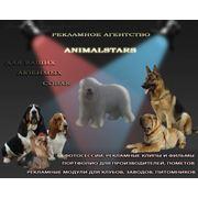 Услуги по рекламе животных фото