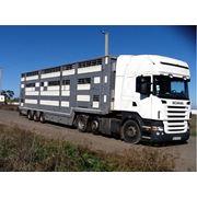 Перевозки скота своими скотовозами за рубеж по СНГ Европе Азии фото