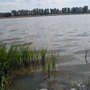 Рыбалка на озере.Рыбоводство фото