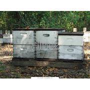 Содержание пчел в ульях фото