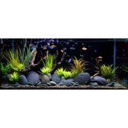 Оформление аквариумов - услуги по аквариумному дизайну фото