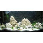 Чистка аквариума Киев фото