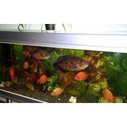 Подбор оборудования для аквариумов. фото