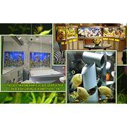 Проектирование и разработка аквариумных комплексов, Украина фото