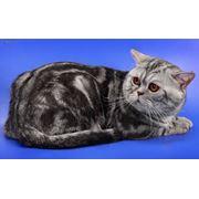 Кот для вязки фото