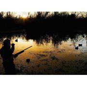 Организация охотничьих туров (Украина Австрия Африка) фотография