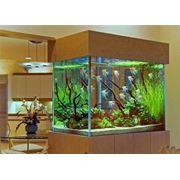 Обслуживание аквасистем фото
