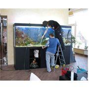 Обслуживание аквариумов, уход за аквариумом, чистка аквариума, аквариумы в Донецке, пресноводный, морской фото