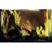 Изготовление аквариумов. фото