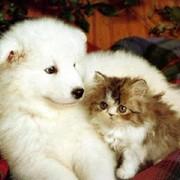 Вакцинация животных фото