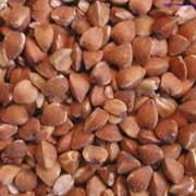 Переработка зерна гречихи в Виннице фото