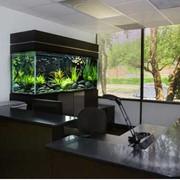 Производство аквариумов под ключ фото