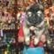 Продаются элитные щенки кавказской овчарки. фото
