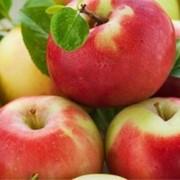 Яблоки (чемпион, лигол, джонаголд, айдаред, голден) фото