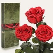 Три долгосвежих розы Алый Рубин в подарочной упаковке фотография