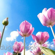 Картина стразами в 3Д - Тюльпаны под голубым небом 50х50 см фото