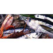 Доставка элитных сортов свежей рыбы и морепродуктов в рестораны Киев Киевская область фото