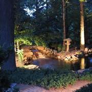 Строительство прудов, Оформление водоемов растениями фото