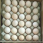 Яйцо куриное С-0,С-1,С-2 фото