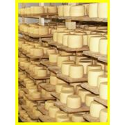 Сыр по швейцарской технологииполутвердый Селыськиймягкий Хусттвердый Нарцис Карпат. Производство фото