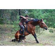 Конные шоу. Постановочные конные трюки. Конные шоу каскадеров. Минск, Выезд по Беларуси фото