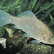 Рыба живая фото