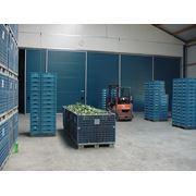 Овощехранилище с принудительным охлаждением сдает камеры для длительного хранения овощей и фруктов фото