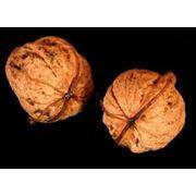 Купим Грецкий Орех калиброванный и не калиброванный фото