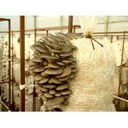 Консультации по организации грибного производства фото