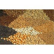 Закупка зерновых и масличных культур: рапс горчица лен горох и подсолнечник. Также закупаем жмых подсолнечника отруби пшеничные гранулированные. фото