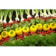 Заготовка сельскохозяйственной и прочей продукции фото