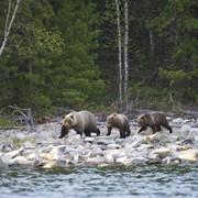 Весенняя охота на Байкале фото