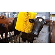Монтаж оборудования для мясомолочной промышленности. Поставка оборудования от производителя. Гарантийное и сервисное обслуживание оборудование. фото
