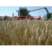 Переработка зерна гречихи и пшеницы Украина Днепропетровск фото
