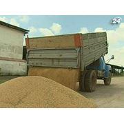 Переработка зерновых на муку фото