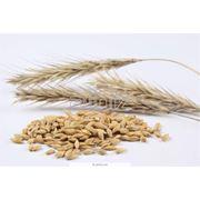 Сушка семян подсолнечника фото
