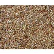 Услуги сушки и хранению сельхозпродукции фото