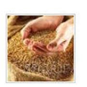 ФУМИГАЦИЯ ЗЕРНА. Заготовка сушка хранение семенного зерна Блок Баг Системс ЧП фото