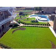 Высококачественный рулонный газон Крым фото