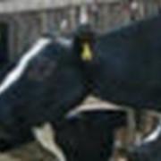 Премикс для высокопродуктивных коров в зимний период фото