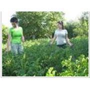 Подборка удобрений для почвы увеличение урожая Днепропетровск фото