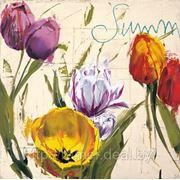 Репродукция, арт постер «Летние тюльпаны «Summer Tulips» фото